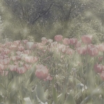 crw_5273-fog3