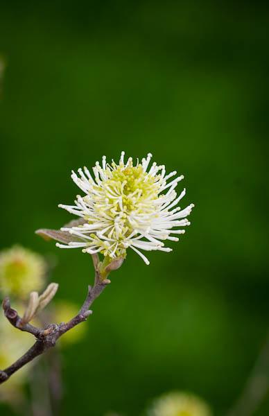 flowers_oakpark-9003