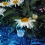 x_prt_Karens-garden-0009-8b