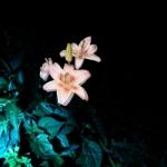 x_prt_Paint-light-0011-8bit_edited copy_edited