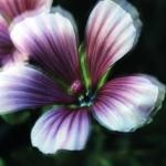 x_prt_purpleaa_91363_006_ed
