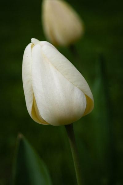 Flowers_OakPark-9013