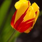 flowers_-9618