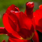 flowers_-9669