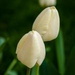flowers_oakpark-8990