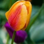 Flowers_OakPark-9037