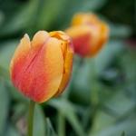 Flowers_OakPark-9039
